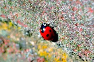 ladybird-133061020954i